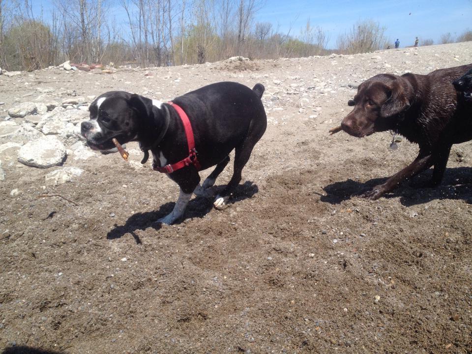 Duke chasing Olivia