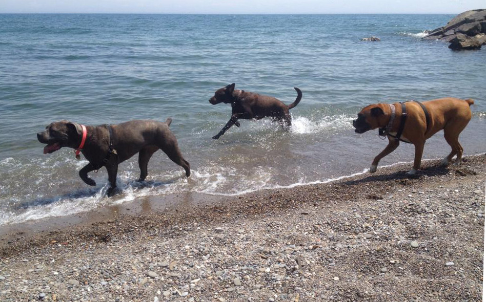 Toront Beach action shot